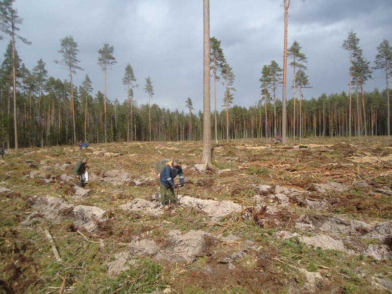 Стоит ли волноваться по поводу заготовки древесины на Борисовщине