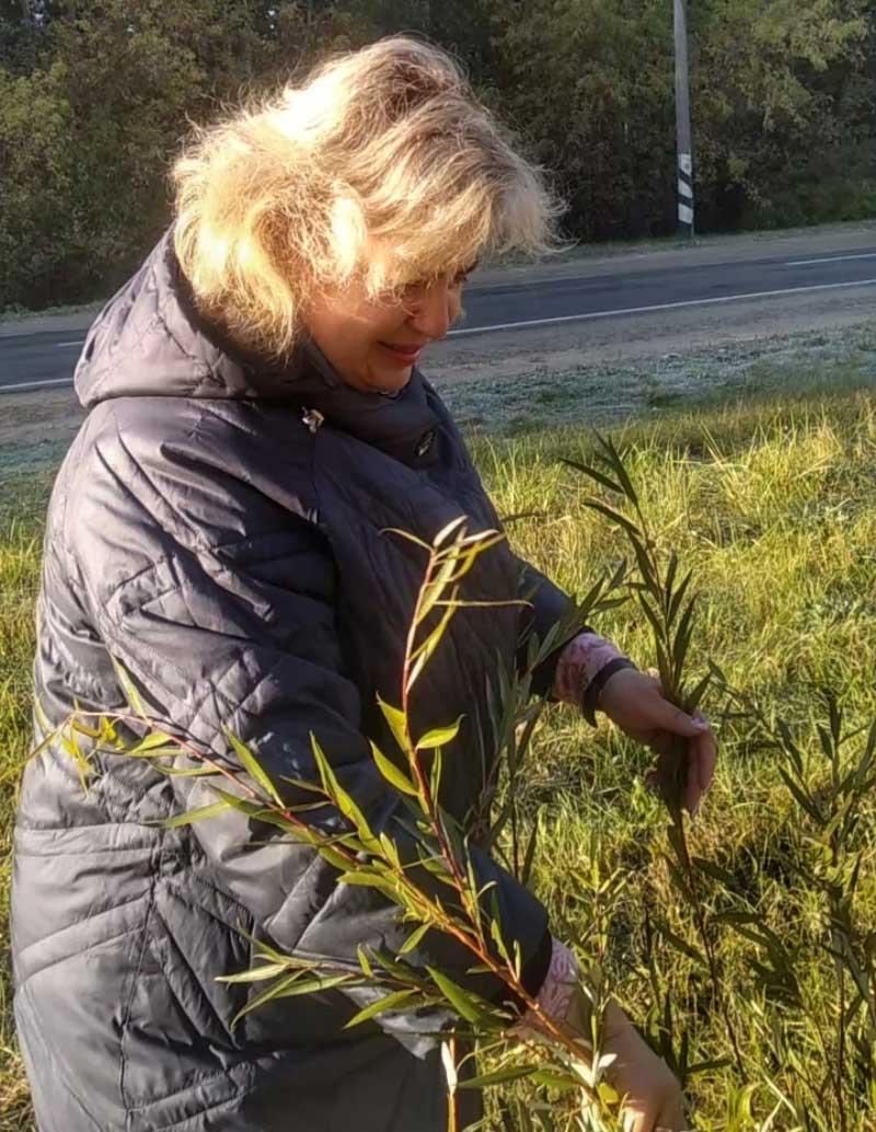 Роскошная аллея из плакучих ив появилась сегодня недалеко от райбольницы